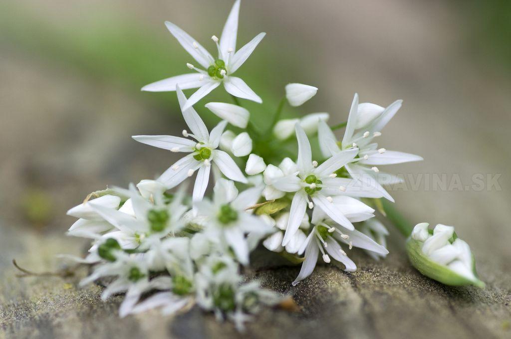Kvety Medvedieho cesnaku